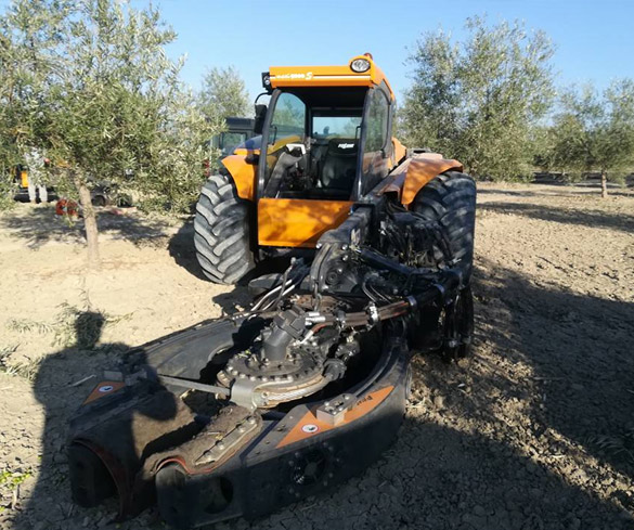 Recogida de aceituna del olivo mecanizada