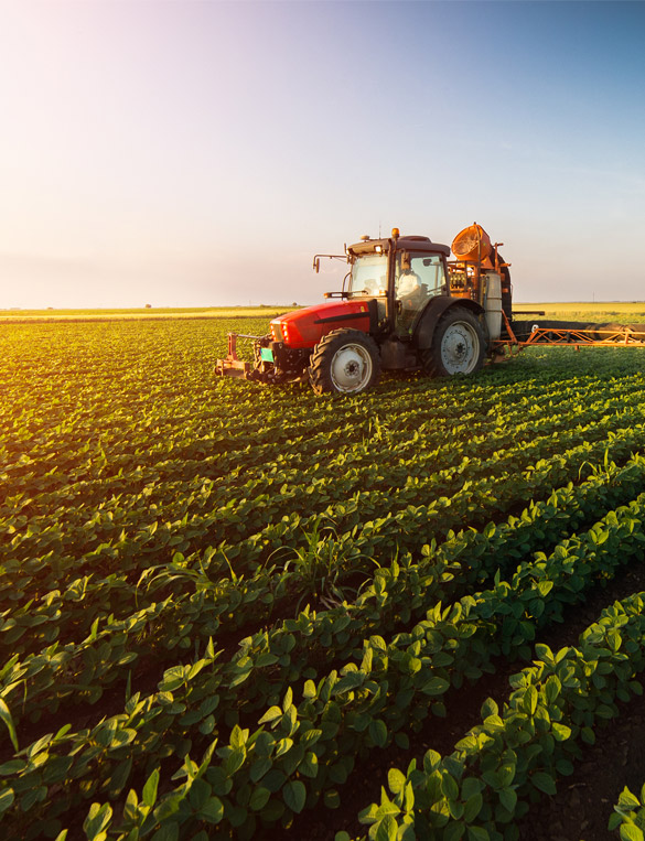 Trabajos Agricolas en Jaen