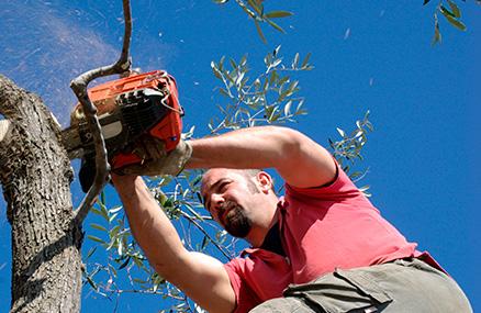 Poda y picado de ramas